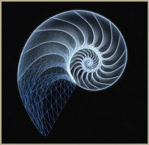 Imagen de una concha de nautilus, ejemplo de la sucesión de Fibonacci