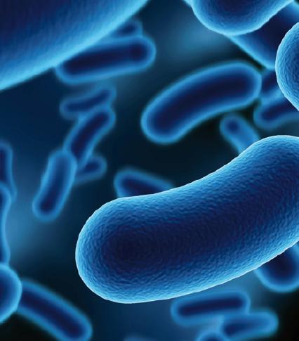 La microbiología (y la física) de los alimentos  (2/3)